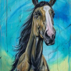 Buckskin horse on blue background